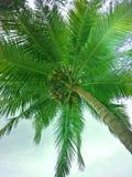 Kokosnöt på havet arkivfoton