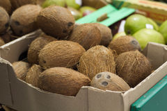 Kokosnöt på hylla i lager Royaltyfri Foto