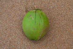 Kokosnöt på sanden Arkivbilder