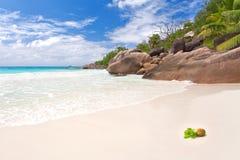 Kokosnöt på stranden Arkivbilder