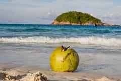 Kokosnöt på stranden Fotografering för Bildbyråer