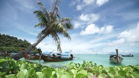 Kokosnöt på stranden i den Pipi ön lager videofilmer