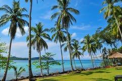 Kokosnöt på stranden på den Kood ön Fotografering för Bildbyråer