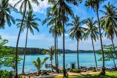 Kokosnöt på stranden på den Kood ön Royaltyfria Bilder