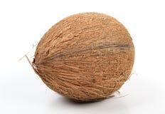 Kokosnöt på vit Fotografering för Bildbyråer