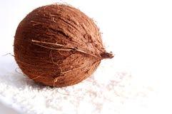 Kokosnöt på vitbakgrund Arkivbild