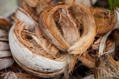 Kokosnöt Shell Royaltyfria Foton