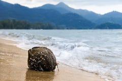 Kokosnöt som är bevuxen med skal som kastas på de sandiga kustvågorna mot bergen royaltyfri fotografi