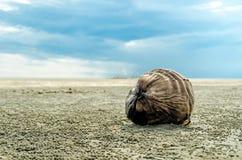 Kokosnöt som ligger på sanden Arkivbilder