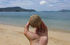 Kokosnöt som rymmer FN handen royaltyfria bilder