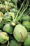 Kokosnöt stjälk ovanför klunga av kokosnötter Arkivbild