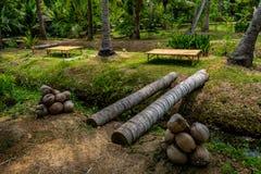 kokosnöt trädgårds- thailand Arkivfoto