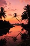 Kokosnötaftonsolnedgång Arkivfoton
