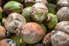 Kokosnötbakgrund Arkivbild