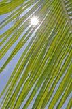 Kokosnötblad med solsken och blå himmel Fotografering för Bildbyråer