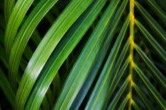 Kokosnötbladbakgrund Arkivbilder