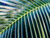 Kokosnötbladslut upp Fotografering för Bildbyråer
