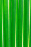 Kokosnötbladtextur Arkivbilder