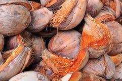 Kokosnötcoir Royaltyfri Bild