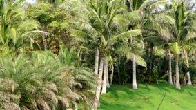 Kokosnötdunge lager videofilmer
