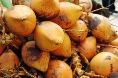 kokosnöten bär fruktt guld- Fotografering för Bildbyråer
