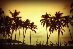 Kokosnöten gömma i handflatan är i vändkretsen på solnedgång Royaltyfria Foton
