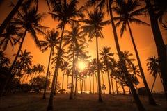 Kokosnöten gömma i handflatan är i vändkretsen på solnedgång Royaltyfri Foto