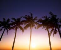 Kokosnöten gömma i handflatan är i vändkretsen på solnedgångbakgrund Royaltyfri Bild