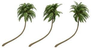kokosnöten gömma i handflatan Arkivfoton