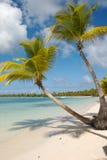kokosnöten gömma i handflatan Royaltyfri Foto