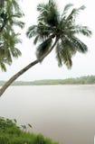 kokosnöten gömma i handflatan Arkivfoto