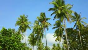 Kokosnöten gömma i handflatan lager videofilmer