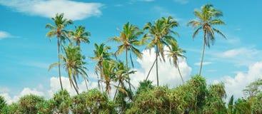 Kokosnöten gömma i handflatan Arkivbilder