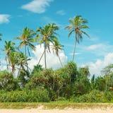 Kokosnöten gömma i handflatan Arkivbild