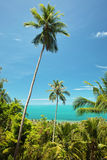 Kokosnöten gömma i handflatan i Thailand Royaltyfri Bild