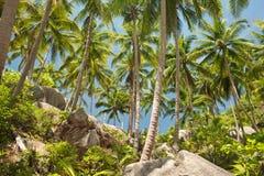 Kokosnöten gömma i handflatan i Thailand Arkivbild