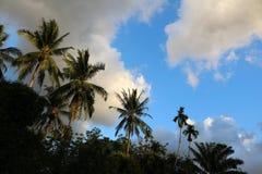 Kokosnöten gömma i handflatan med himlen i aftonen Arkivbilder
