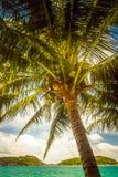 Kokosnöten gömma i handflatan med tokig benägenhet över havet arkivfoton