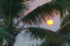 Kokosnöten gömma i handflatan och solen Royaltyfria Bilder