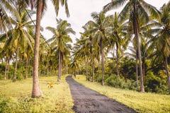 Kokosnöten gömma i handflatan och vägen i den tropiska ön Tropiska träd, väg i paradis Royaltyfri Foto