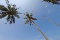 Kokosnöten gömma i handflatan på bakgrunden för blå himmel Arkivbild