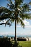 Kokosnöten gömma i handflatan på en tropisk kust royaltyfri bild