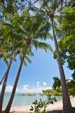 Kokosnöten gömma i handflatan på en tropisk strand royaltyfri bild