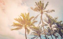 Kokosnöten gömma i handflatan på havsstranden Royaltyfri Fotografi