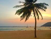 Kokosnöten gömma i handflatan på stranden på solnedgången Royaltyfri Fotografi