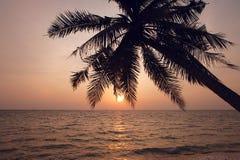 kokosnöten gömma i handflatan silhouettetreen Royaltyfri Foto