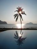 kokosnöten gömma i handflatan silhouettetreen Arkivfoto