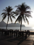 kokosnöten gömma i handflatan silhouettetreen Royaltyfria Bilder