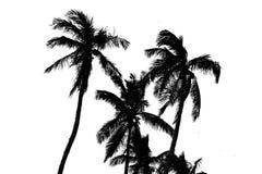kokosnöten gömma i handflatan silhouettetrees Royaltyfri Fotografi