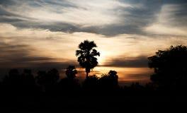 kokosnöten gömma i handflatan silhouettetrees Arkivbild
